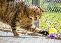 Cat in enclosure playing
