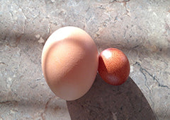 Large chicken egg compared to a small chicken egg