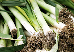 Leeks from veggie patch