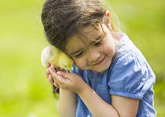 little-girl-with-baby-chick