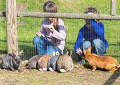 Children feeding rabbits through a wire fence