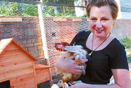 rescue-hens-are-re-homed-after-bushfires