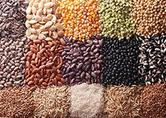 Seeds and grains for chicken feed
