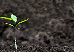 Young sprout in soil