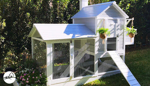 Which Chicken Coop is Best for my Backyard?
