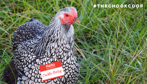 top 20 pet chicken names