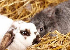 Rabbits are absolutely adorable and easy to take care of too|
