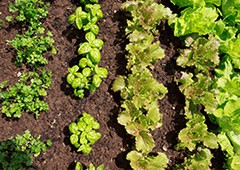 spring and summer are an excellent time to start vegetable farming