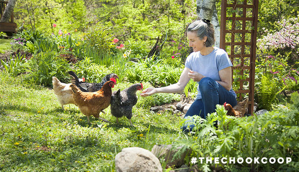 woman feeding backyard pet chickens