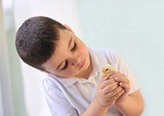 Young boy caring for baby chicken