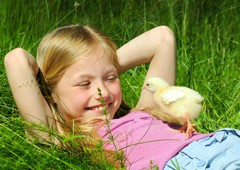 Young girl laughing with baby chicken