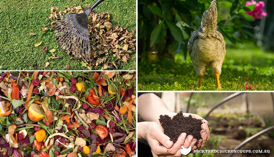 chicken manure is one of the ingredients to great compost and fertilizer