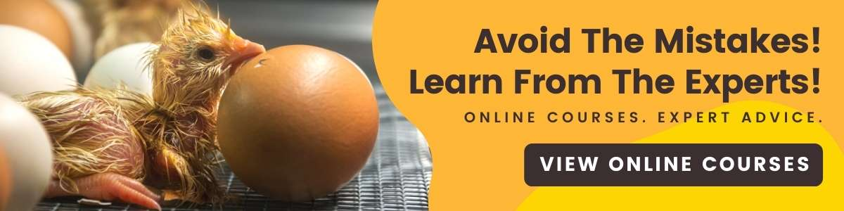 Raising Baby Chickens Course