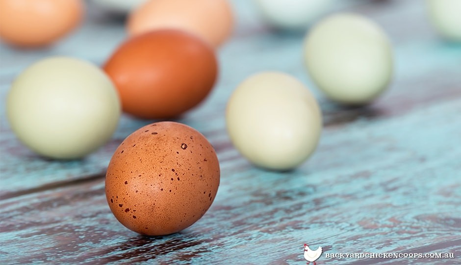 keeping an eye on your chicken's egg shells can tell you if they are healthy