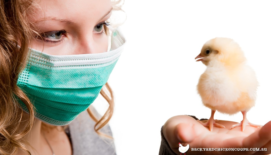avian-encephalomyelitis-most-commonly-affects-chicks
