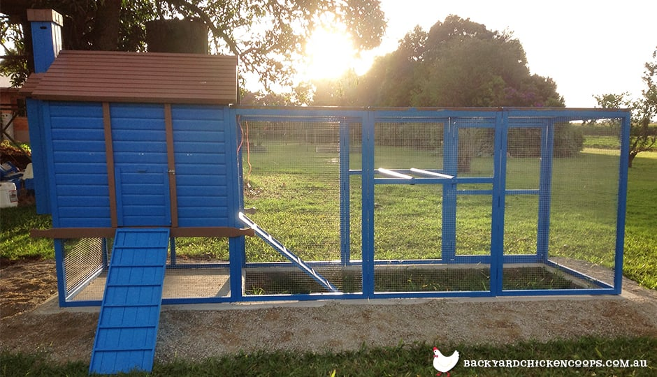 backyard-chicken-coops-should-have-access-to-sunlight
