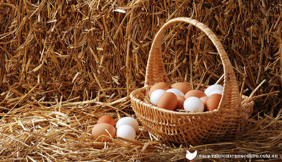 brown-eggs-and-white-eggs-are-the-same