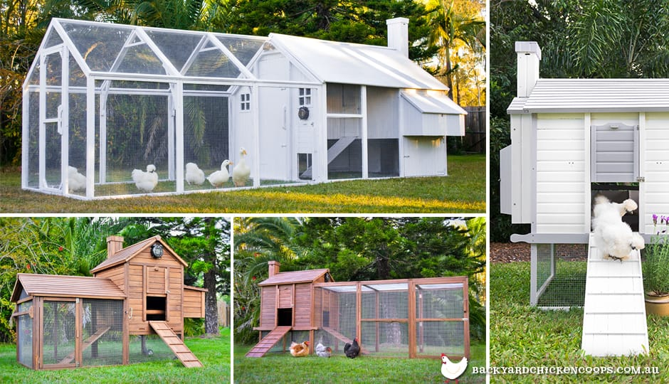 buy-a-chicken-coop-to-love-your-chickens