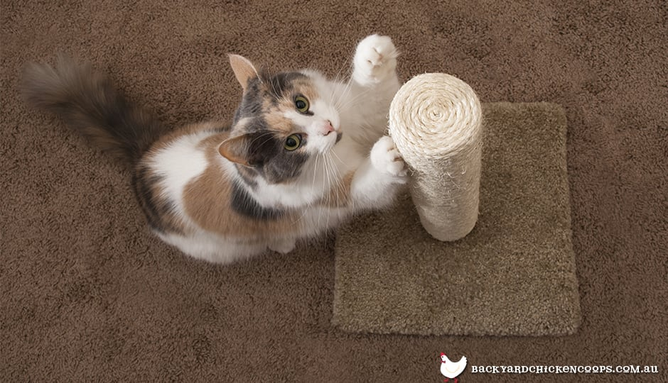 cat-playing-with-scratching-post
