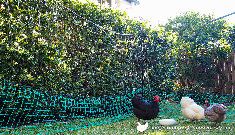 chicken coop accessory poultry fencing
