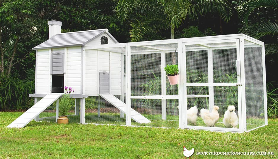 How Do I Stop My Chickens From Getting Over The Fence?