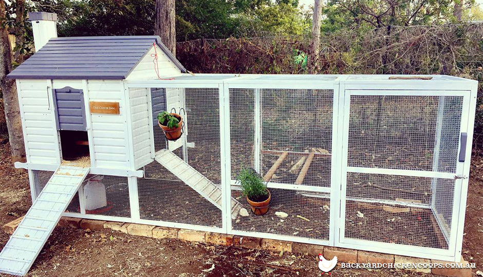 chicken run landscaping idea pots hanging on run mesh
