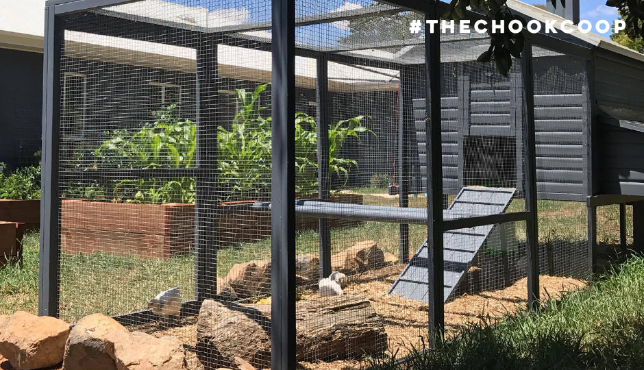 chicken run with stumps and perches