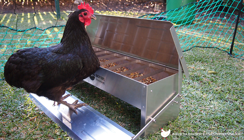 ff128dca 3 Reasons a Treadle Feeder is Best For Your Chickens