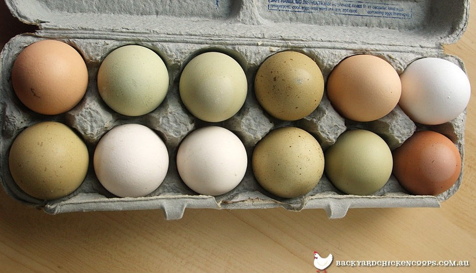 different-coloured-chicken-eggs-in-carton