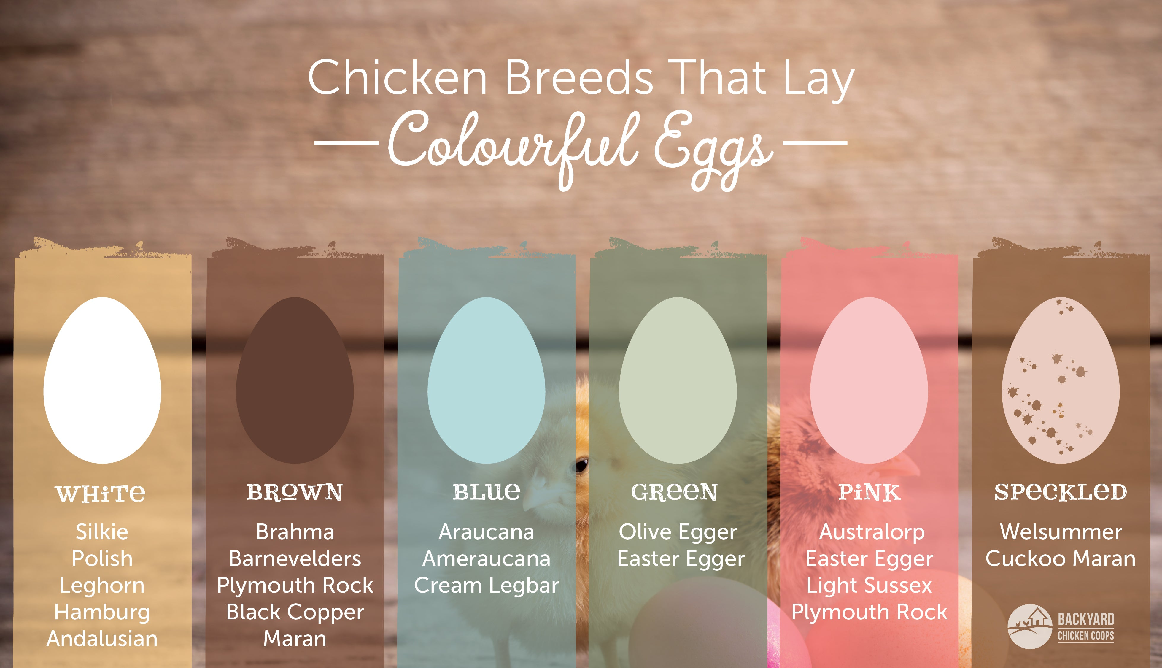chicken breeds that lay coloured eggs