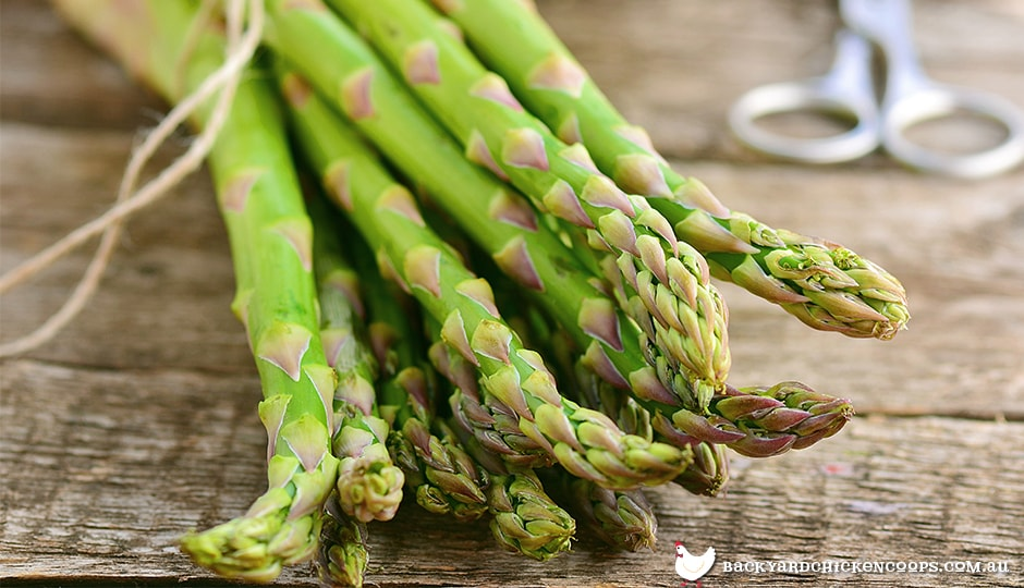 common-green-asparagus-is-exceptionally-healthy