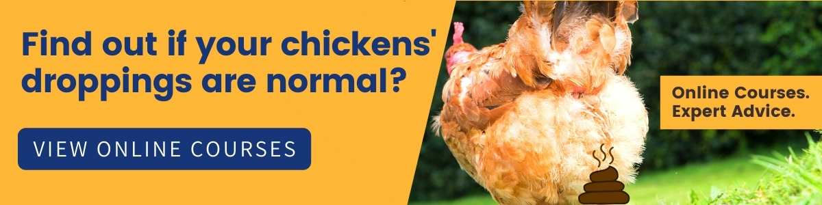 Diarrhoea-In-Chickens-Health-Course