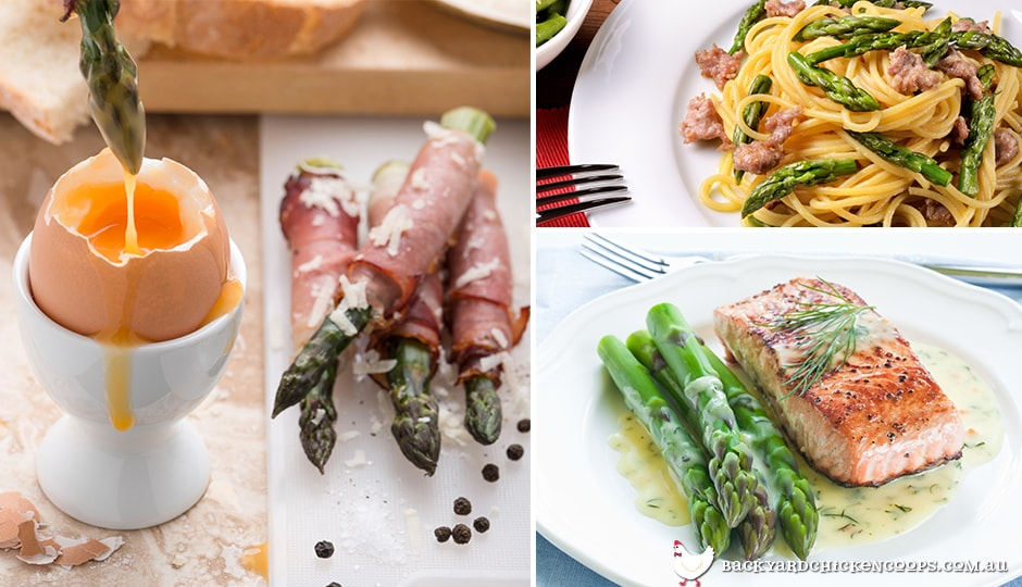 different-delectable-dishes-with-asparagus