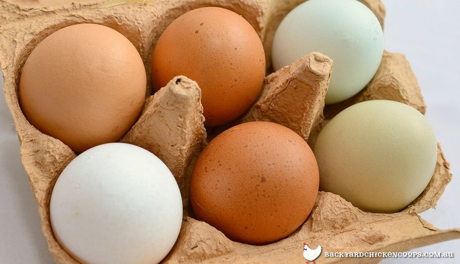 different coloured chicken eggs in a carton