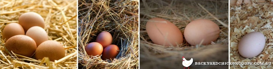 dwindling-egg-supplies-non-laying-hens