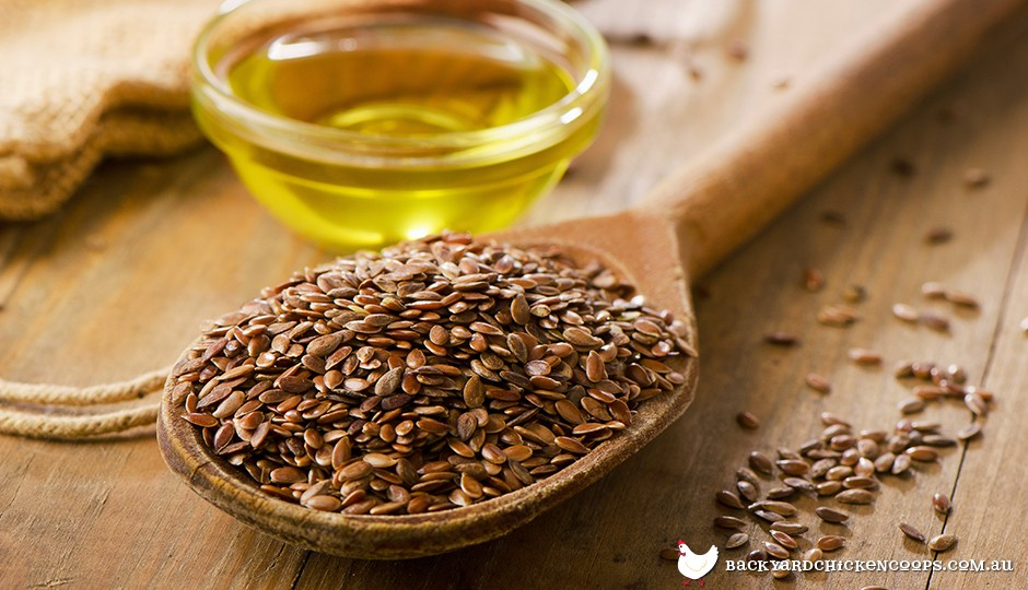 Flax seed and oil for chicken feed
