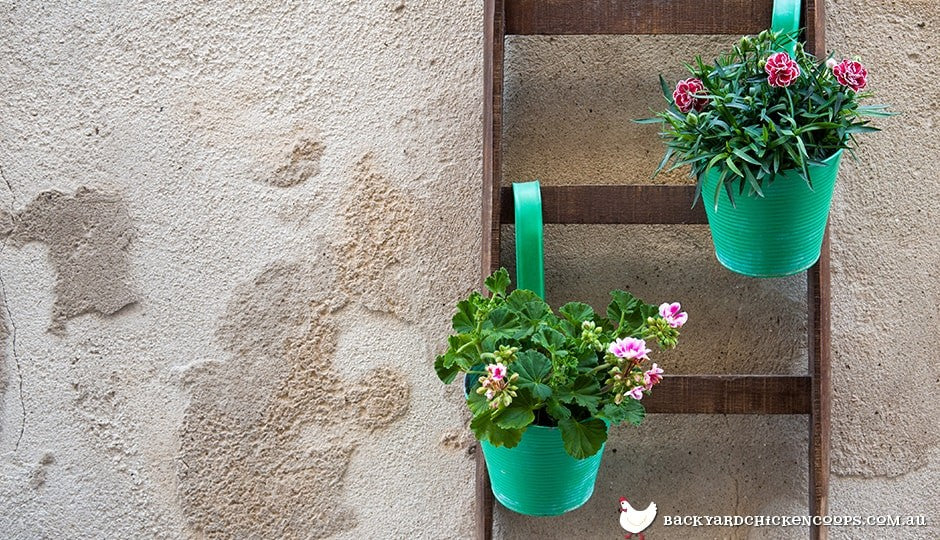 ladders are ideal for hanging flower pots