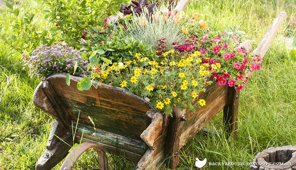 wheelbarrows make great flower beds