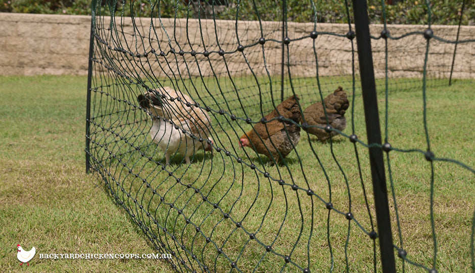 garden protected electric fencing chickens