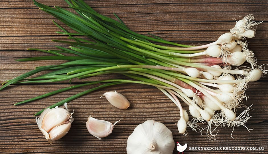 garlic-cloves-are-the-seed-of-the-plant