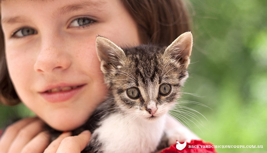 growing up with a cat or kitten is an amazing experience for a child