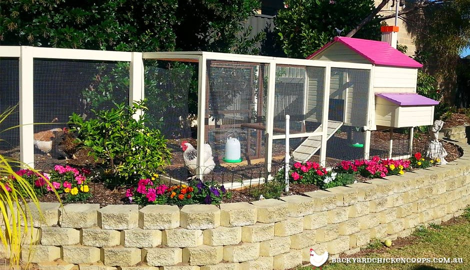 great-inspiration-for-chicken-run-landscaping
