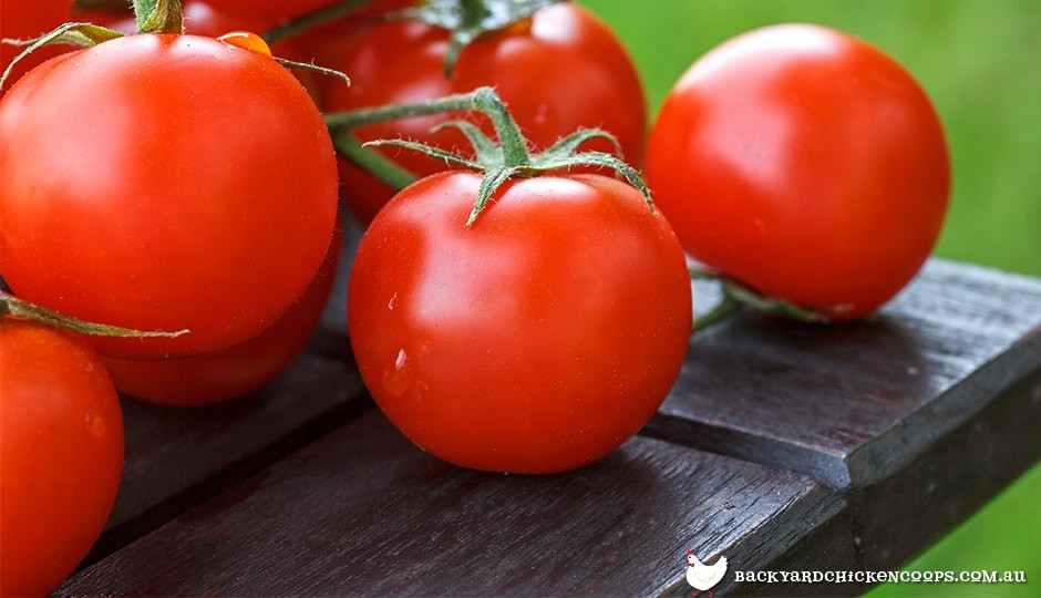 growing-tomatoes-in-the-garden