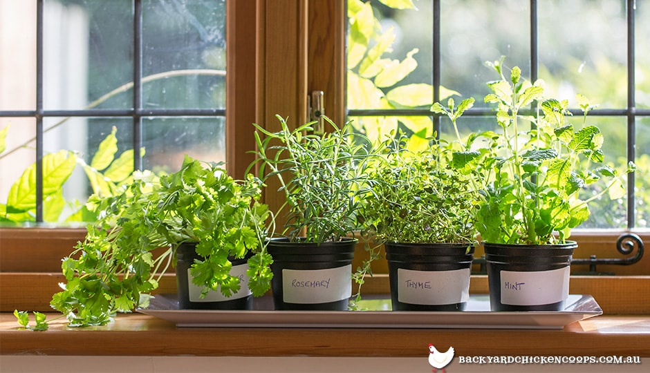 herb-gardens-are-essential-and-easy