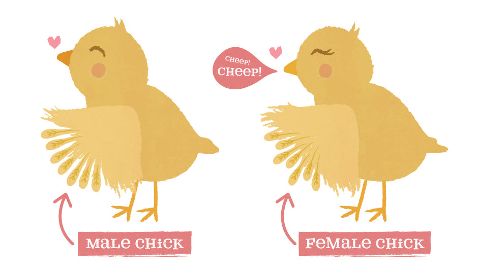 how to tell chicken sex by wing