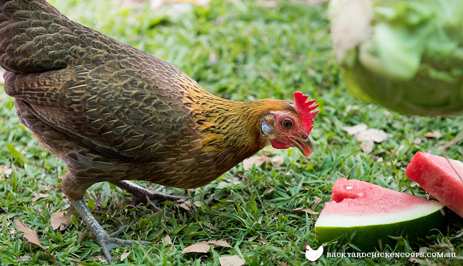 42 Pure Breed Chickens Available In Australia