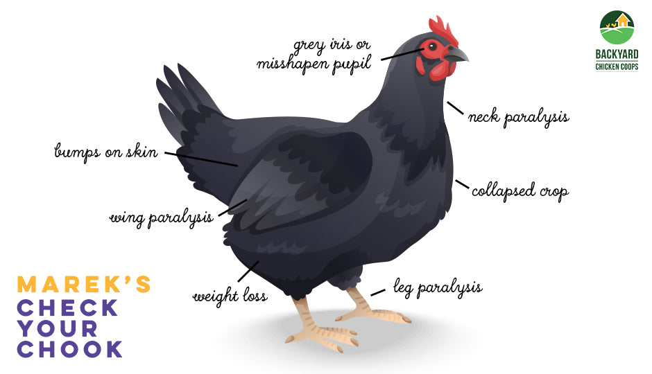 mareks disease in chickens