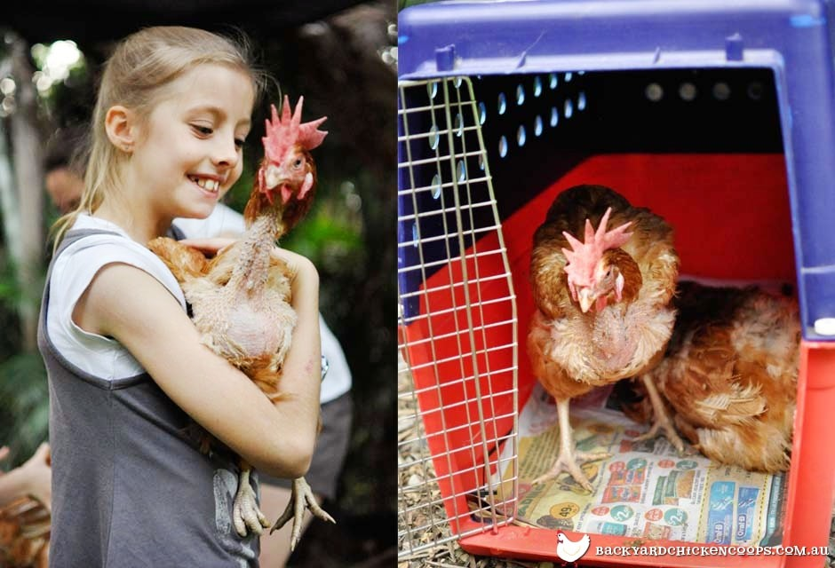 child with rescued battery hens