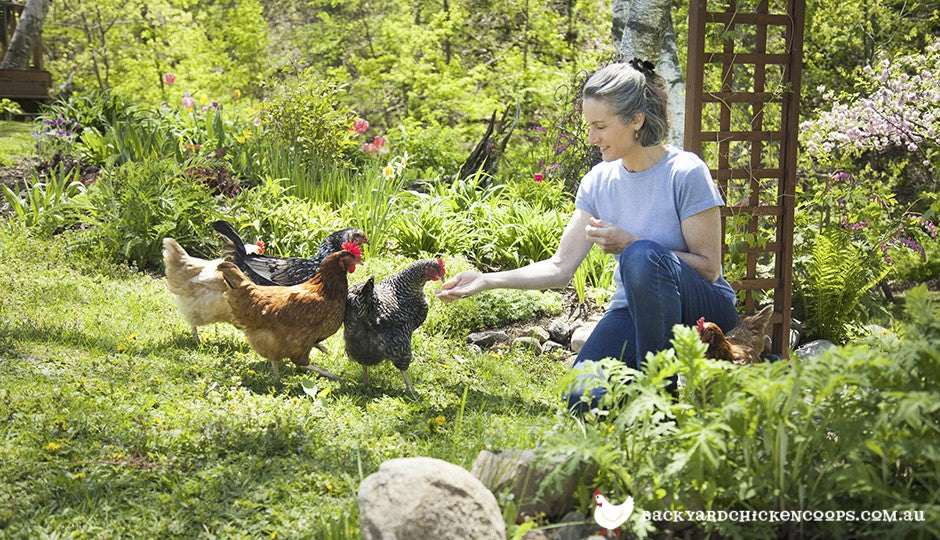 Woman feeding backyard chickens