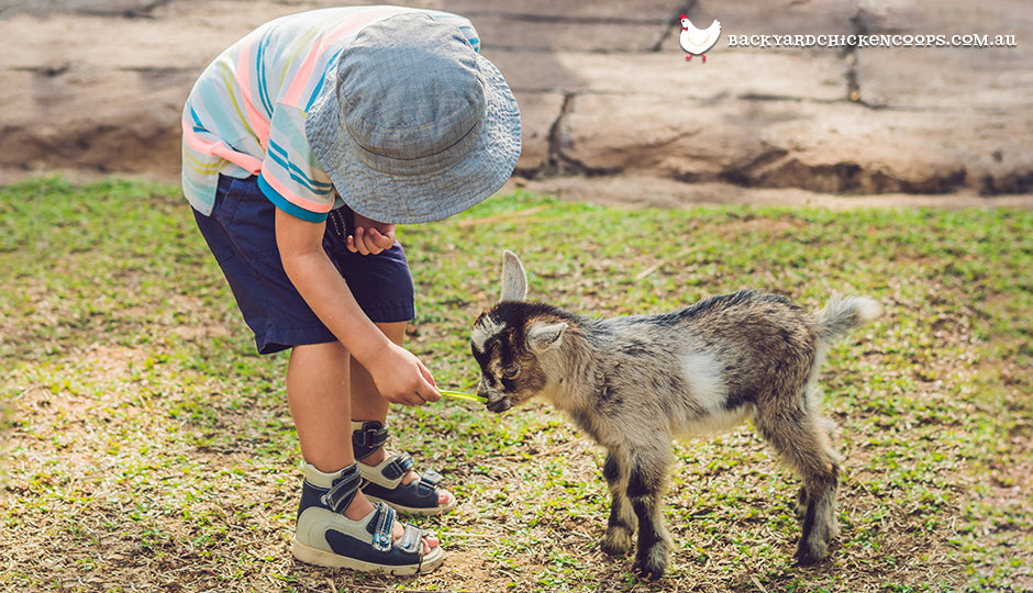 child with pet goat
